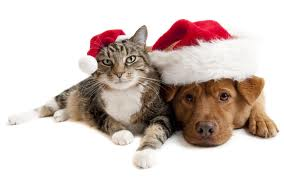 bonnet noel chat Chat et chien avec bonde Noël bonnet noel chat