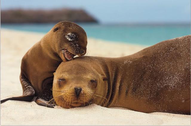 Câlins de phoques