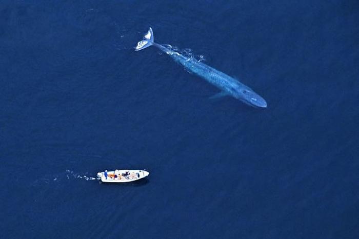 Croisement Entre Un Bateau Et Une Baleine