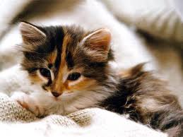 Photo chaton mignon