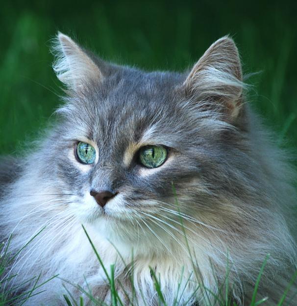 chat des herbes
