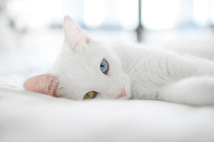 les chats sont des guérisseurs holistiques 441-542466_10151199517995120_1405854746_n