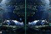 10 différences et lucioles