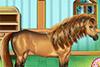 S'occuper d'un beau cheval