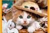 Puzzle de chaton