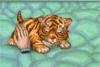 Jeu de filles avec un bébé tigre