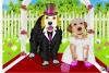 Un mariage de chiens