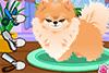 Petit chien à toiletter